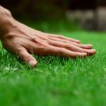 healthy green salt lake city lawn