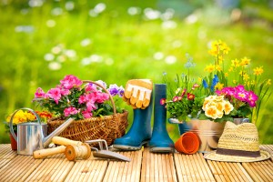 How to Start a Garden for Spring
